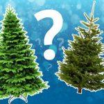 Какая ёлка лучше? Как выбрать ёлку к Новому году?