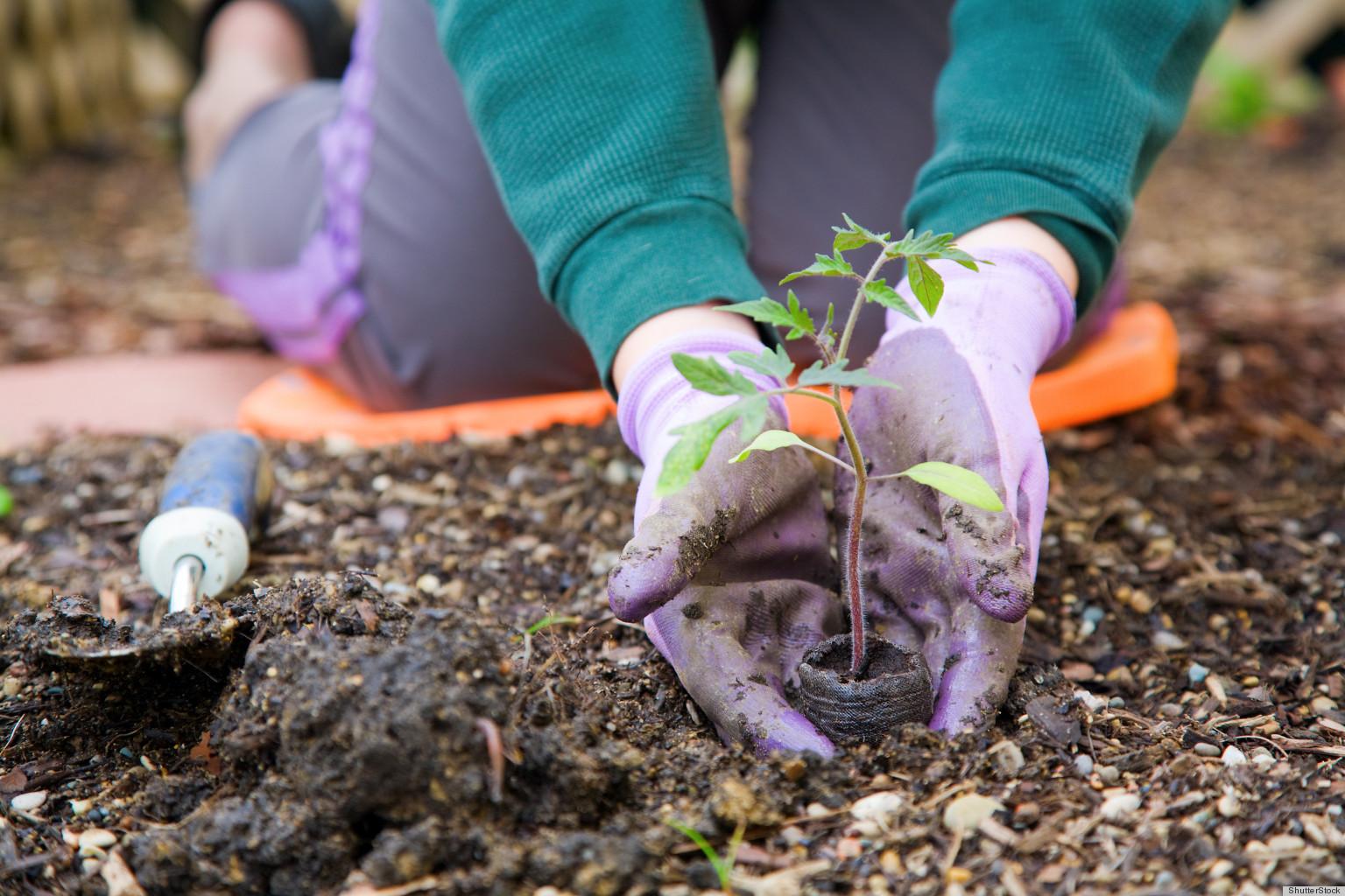 Когда нужно сажать рассаду?