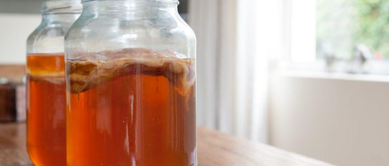 Как ухаживать за чайным грибом и чем он полезен?